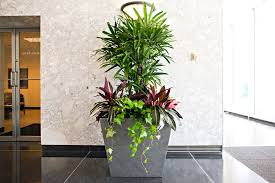 small plants for office. Interior Office Plants Plant Services And Rentals Small For