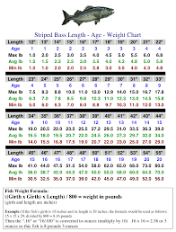 Shark Size Chart Nj Fish Size Chart How Different Shark Species Measure
