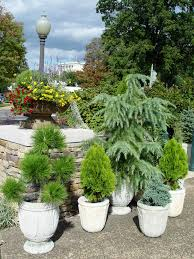 patio trees in containers outdoor goods with sizing 1536 x 2048