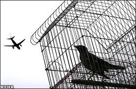 نتیجه تصویری برای پرنده و قفس