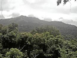 protect philippine forests inquirer opinion