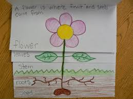 plant parts flip book mrs t s first grade cl