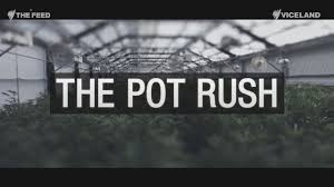 legal weed in pueblo economic wonder or public health crisis the feed