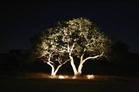 uplighting shows the beauty of your trees