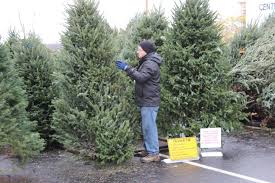 Christmas Tree Farm Cartoons And Comics  Funny Pictures From Local Christmas Tree Lots
