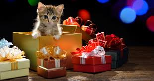 file_2399_what-is-the-best-christmas-gift-for-a-cat.jpg 1 200 ...