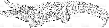 Small Picture Drawn crocodile Pencil and in color drawn crocodile