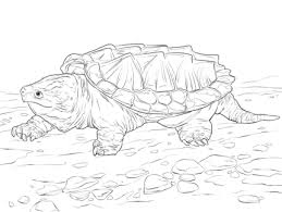 Small Picture Click to see printable version of Walking Alligator Snapping