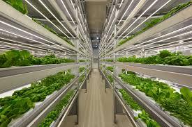 iFarm - Технологии для выращивания натуральных овощей, ягод ...