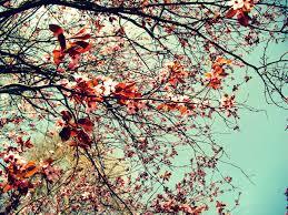 nature backgrounds tumblr. Tumblr Nature Backgrounds 16961