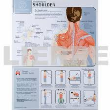 Strengthening The Shoulder Joint Chart: $36.55 | Lierre.ca