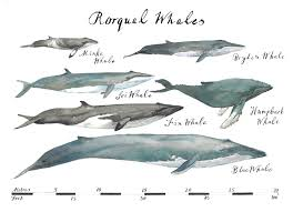 Whale Chart Print Camilla Seddon Art Originals Prints