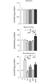 dopamine levels in the striatum motor cortex and somatosensory cortex brain tissues from the six groups n 5 7 mice per group were collected at 4 h