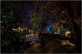 tree lighting ideas. French Wedding Lighting Ideas Tree
