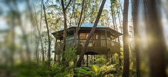 Takashi Kobayashi And Hiroshi Nakamura Build Treehouse Around 300 Treehouse Accommodation Nsw