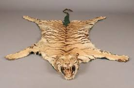 vintage tiger hide rug w head taxidermy this lot will not be sold on ripley auctions