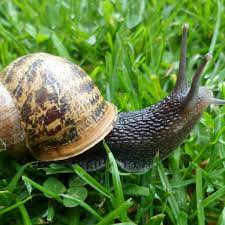 The war against snails: can gardeners ever win?   Gardens   The Guardian