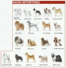 Exact Dog Breeds Identification Chart Breeds Of Dogs Chart