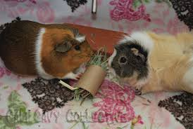 truffle and sharing a