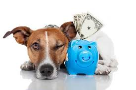 Should I List My Pet Sitting Prices On My Website