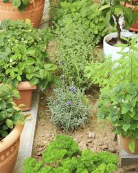 Small Picture Herb Garden Design Different Types Of Herb Gardens