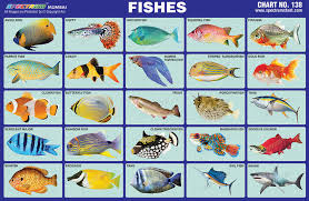 Spectrum Educational Charts Chart 138 Fishes