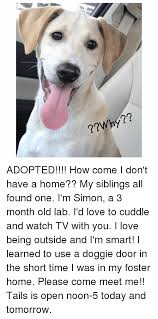 love memes and home why adopted