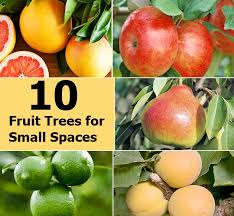 small garden fruit trees designs