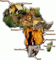 Реферат Африка Опис материка Марта Рефераты  Рефераты
