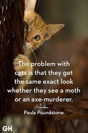 25 Quotes Only Cat Owners Will Understand Funny Cat Quotes