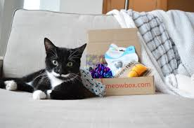 A monthly cat subscription box filled with fun unique toys and goodies