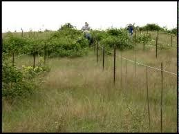 killing blackberry bushes permanently. Killing The Blackberry Bush And Bushes Permanently