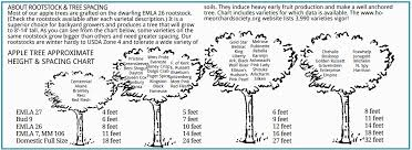 13 Rigorous Tree Spacing Chart