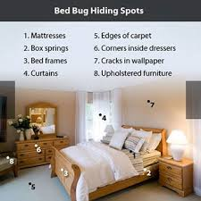 Get Signs Of Bed Bugs On Bed Frame PNG