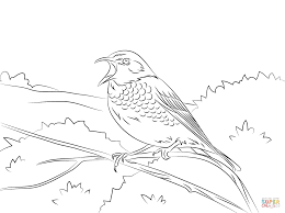 Small Picture Thrush coloring pages Free Coloring Pages