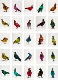 Image result for pigeons