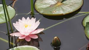 7 Spiritual Symbols To Deepen Your Yoga Meditation