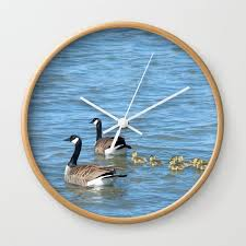 canadian geese swimming wall clock