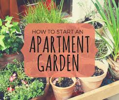 how to start a small garden. How To Start A Small Garden