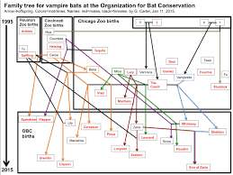 Ancestry Diagram Ancestry Chart For The Vampire Bats At Organization For Bat