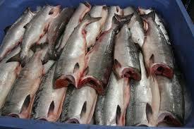 Alaska Seafood Factory ...
