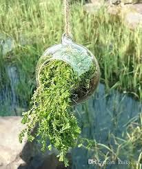 air plant terrarium glass globe terrarium kit hanging air plant terrarium for home decoration diameter rope