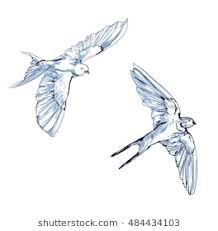 flying bird drawing.  Bird Swallow Vector Vector Illustration Isolated Birds Birds Flying Animals  Bird Silhouette Intended Flying Bird Drawing