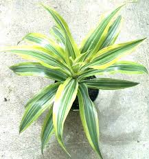 Tropical office plants Common Household Home Depot Office Plants Yucca Plant Home Depot Low Light Indoor Plants Image Of Aesthetic Tropical House Plants Low Light Low Light Indoor Plants Home Avril Paradise Home Depot Office Plants Yucca Plant Home Depot Low Light Indoor