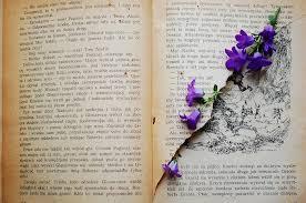 book old book flower flowers violet vine old