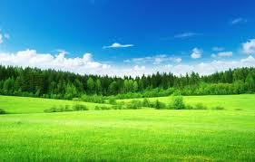 Wallpaper green, Nature, Field, Grass ...