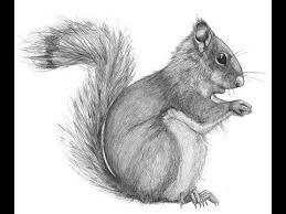 Small Picture How to draw African Bush Squirrel drawing step by step YouTube