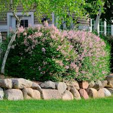front yard landscaping ideas with rocks