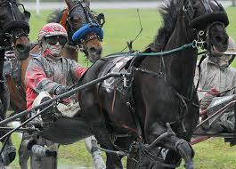 Image result for horse racing new brunswick