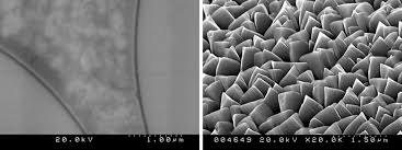 Field Emission Scanning Electron Microscopy Fesem Photometrics
